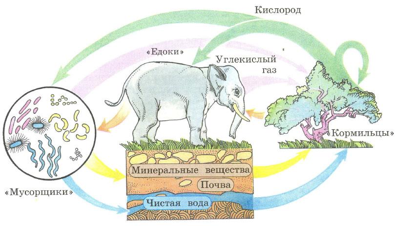 Схема деятельности живых