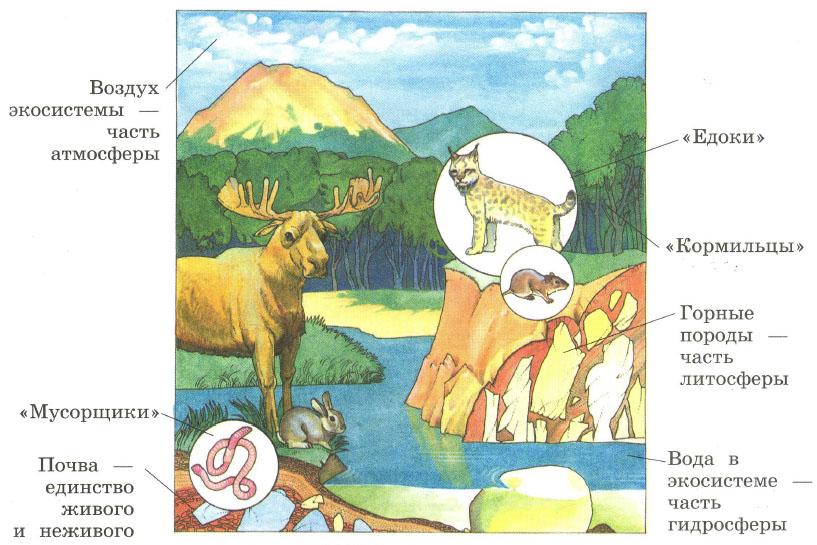 Жизнь экосистемы Цепи питания Биология Реферат доклад  Жизнь экосистемы Цепи питания