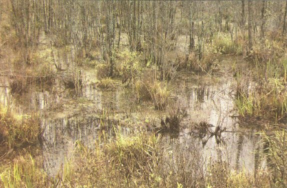 Реферат озера и болота 4405