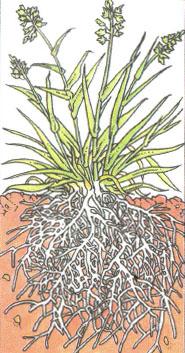 Экосистема луга Растения и животные Биология Реферат доклад  Экосистема луга Растения и животные