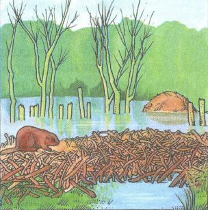 Причины изменения и смен экосистем Нарушение и сохранение  Запруда на реке может превратить луг в болото