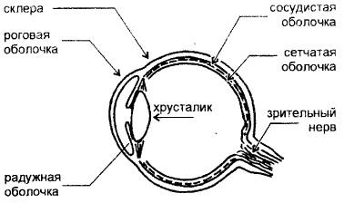 Реферат глаза и зрение 79