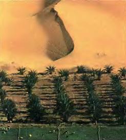 Экологические проблемы Африки География Реферат доклад  Экологические проблемы Африки