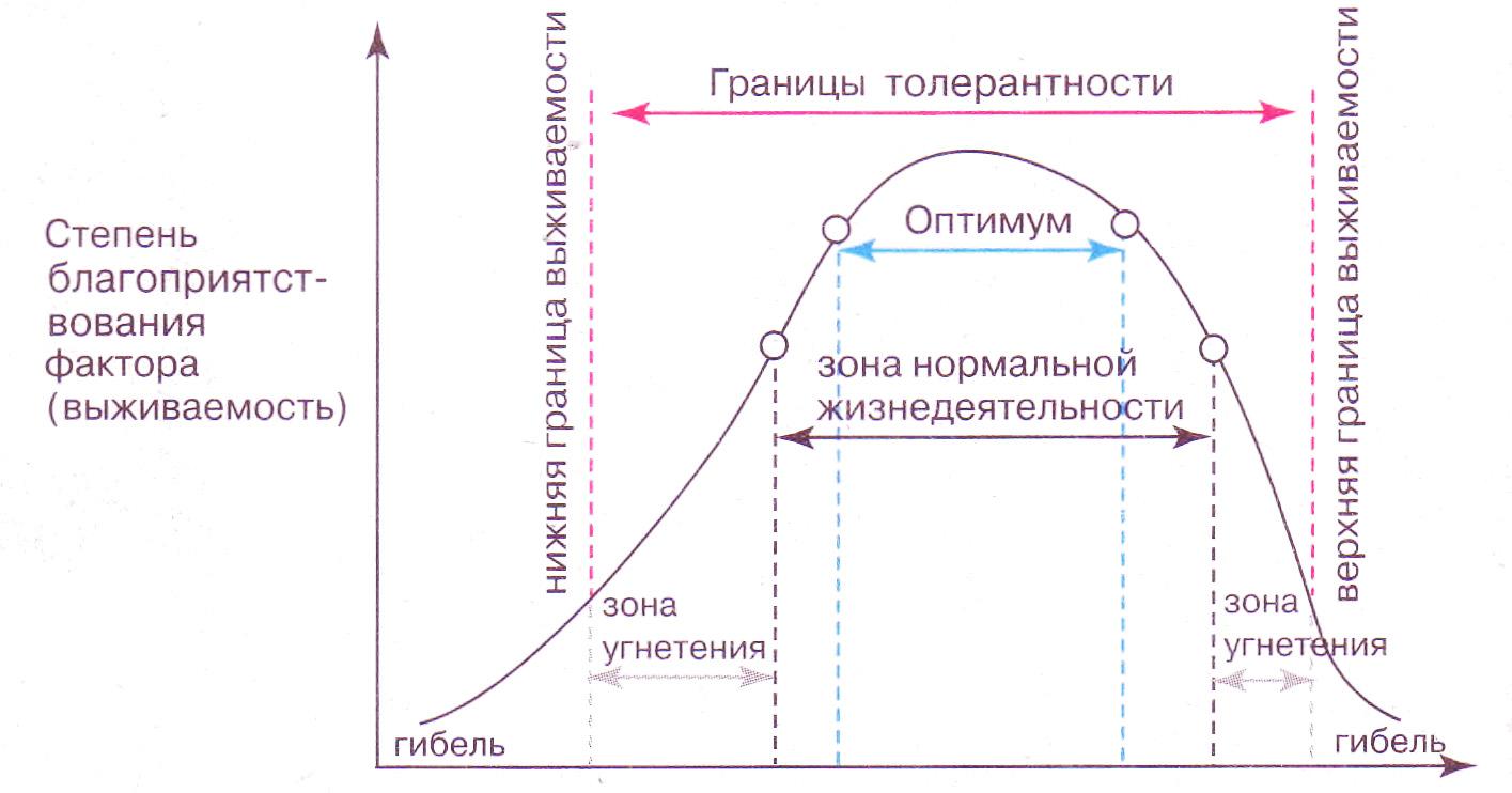 Закон толерантности Шелфорда Биология Реферат доклад  Графическое представление закона толерантности Шелфорда