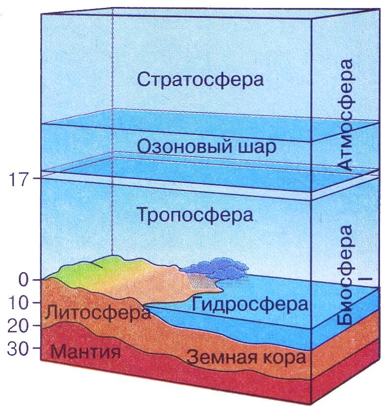 Структура биосферы доклад по биологии 8225