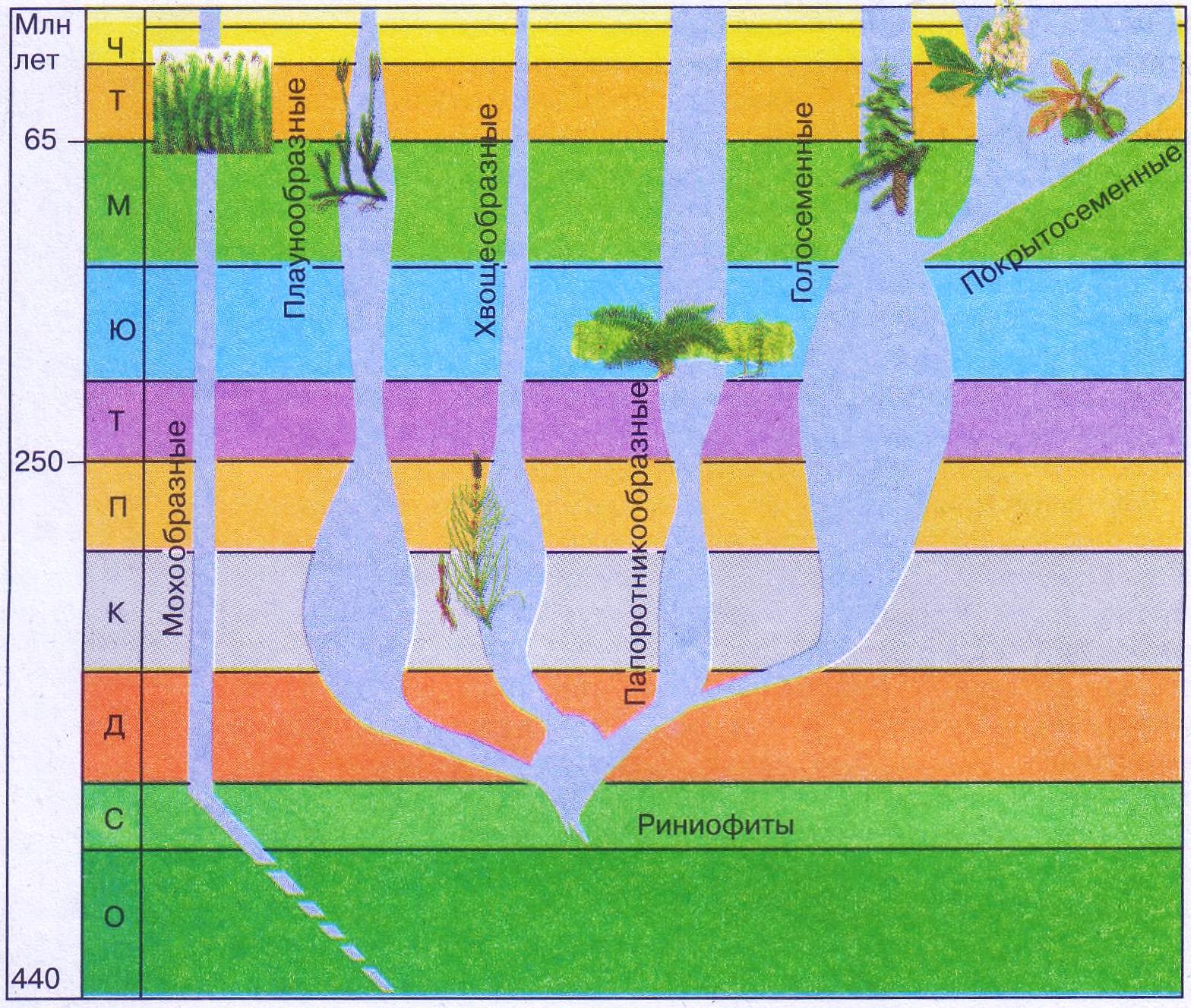 Пути и закономерности эволюции растений Биология Реферат  Рис 225 Родословное древо высших растений