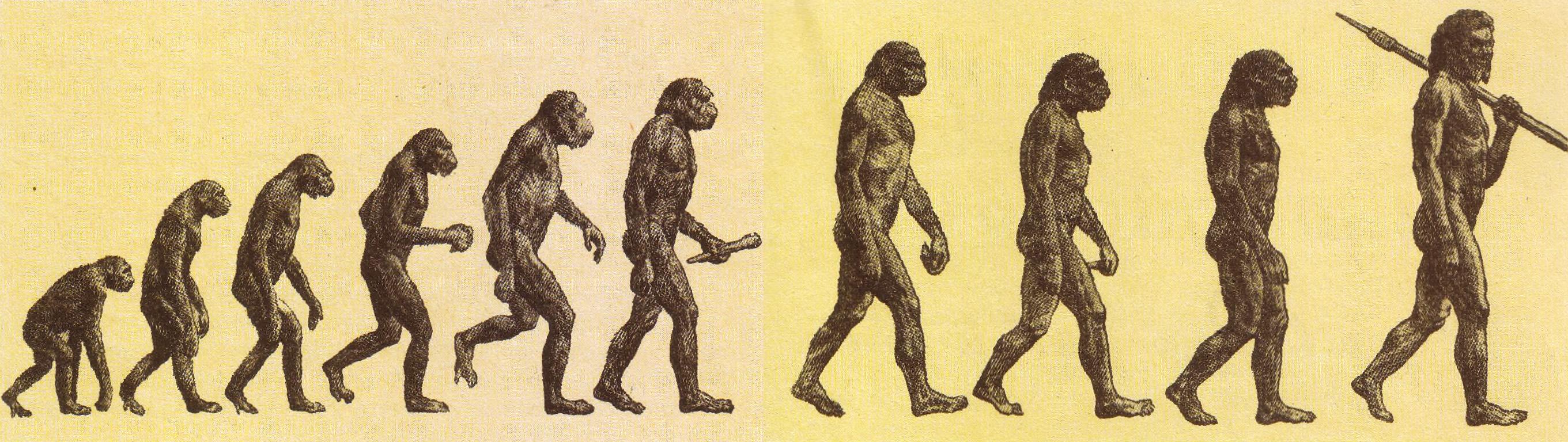 Один рисунок человека образные обезьяны 3