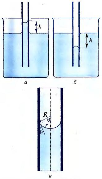 Доклад о капиллярных явлениях в природе 5437
