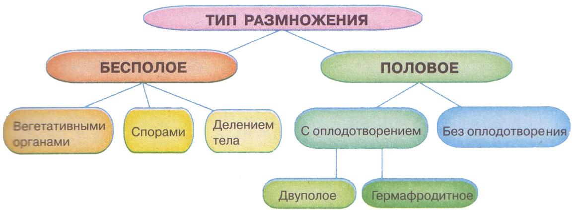 Реферат по биологии размножение организмов 7847