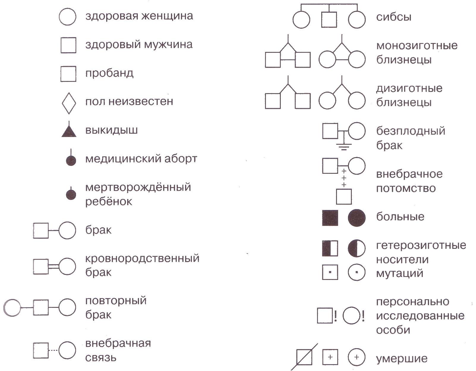 Генеалогический метод исследований в генетике Биология Реферат  Рис 25 Обозначения при составлении родословной