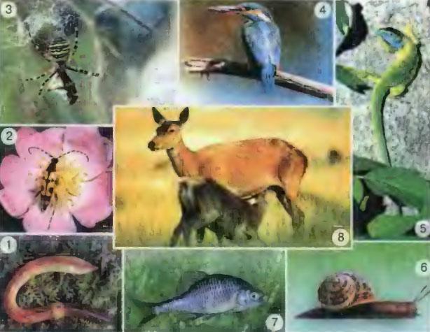 Системы органов животных кратко Природоведение Реферат  Разнообразный мир животных 1 дождевой чернь 2 насекомое 3 паук 4 птица 5 ящерица 6 моллюск 7 рыба 8 млекопитающие