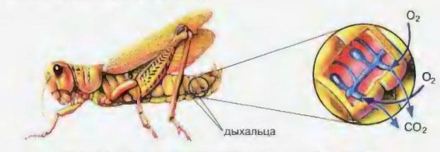 lizhet-anus-krasotke