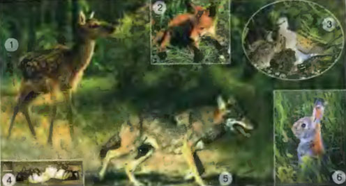 обитатели леса доклад с картинками
