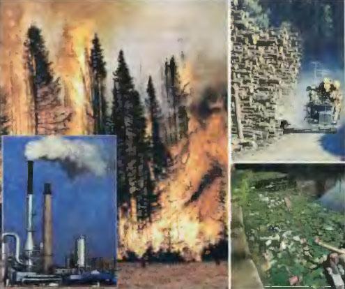 Что приносит вред природе картинки