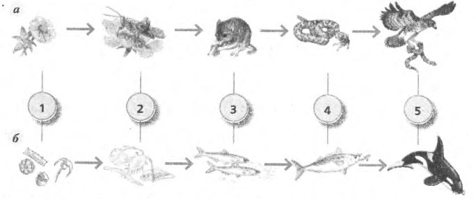 Цепи питания в экосистеме